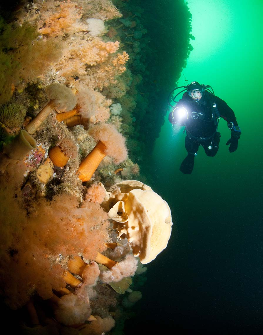 Gros Morne scuba diving