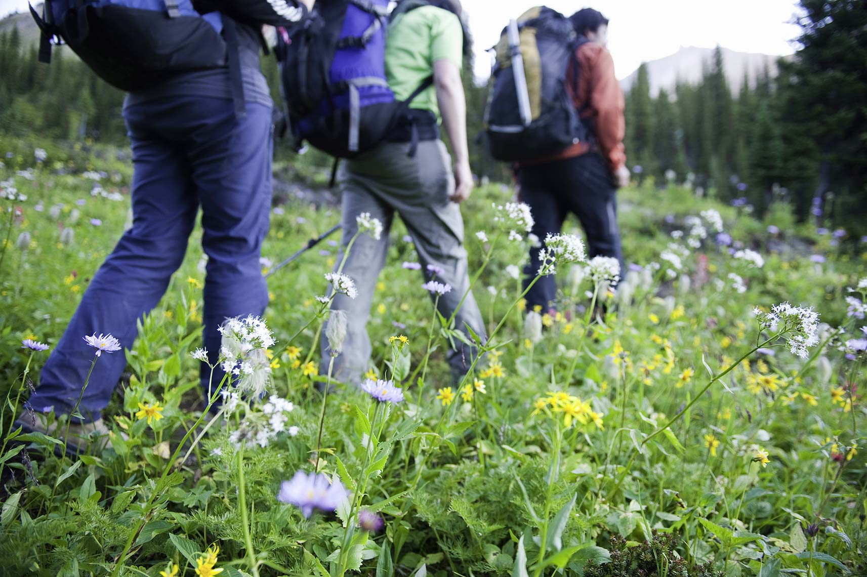 hikers in wildflowers Golden BC