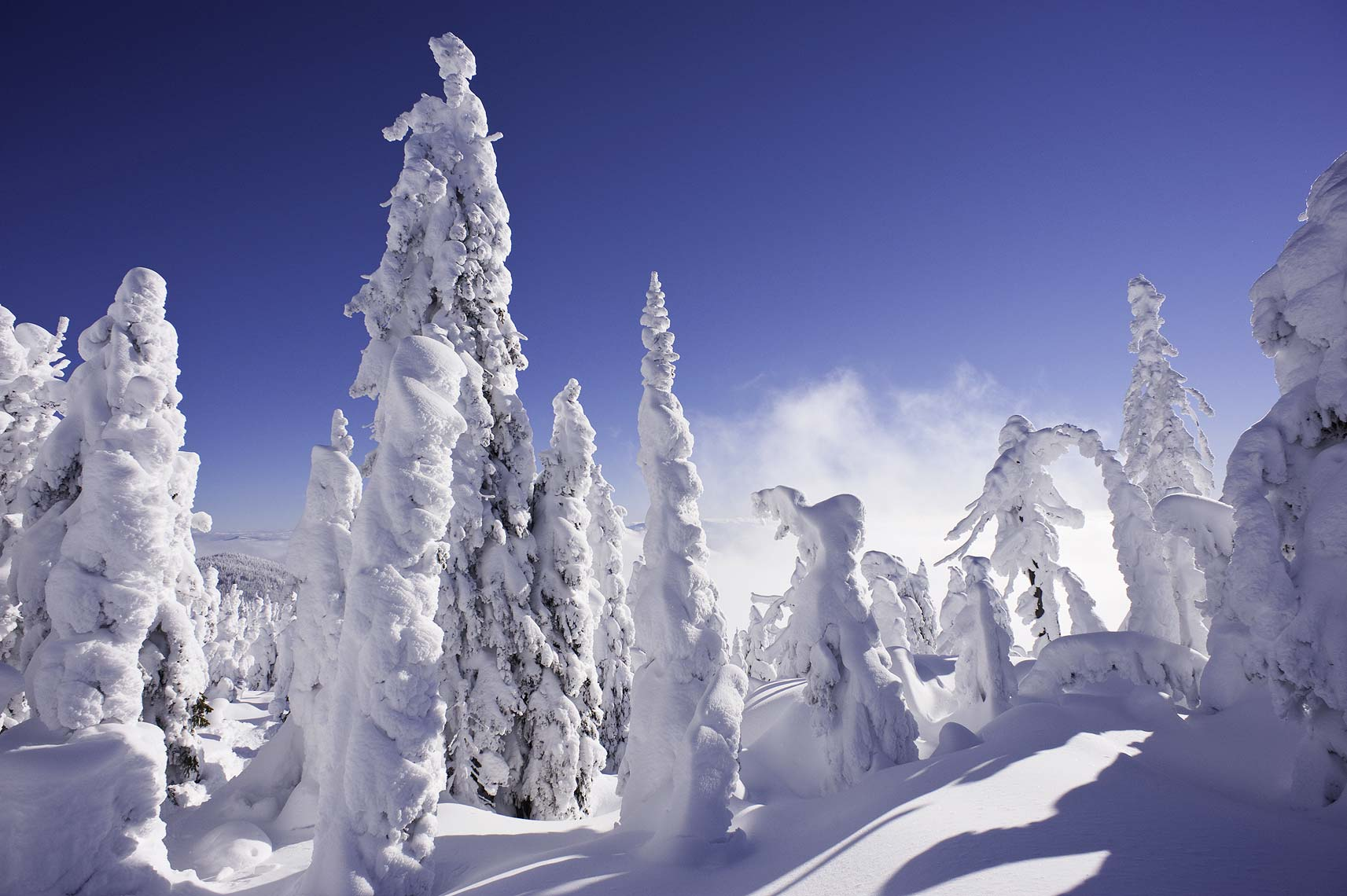 snowy trees in backcountry